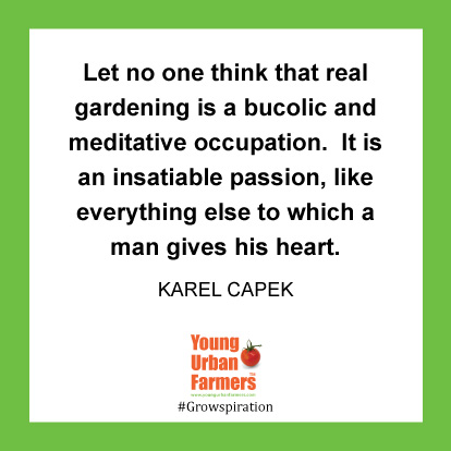 Let no one think that real gardening is a bucolic and meditative occupation. It is an insatiable passion, like everything else to which a man gives his heart. Karel Capek