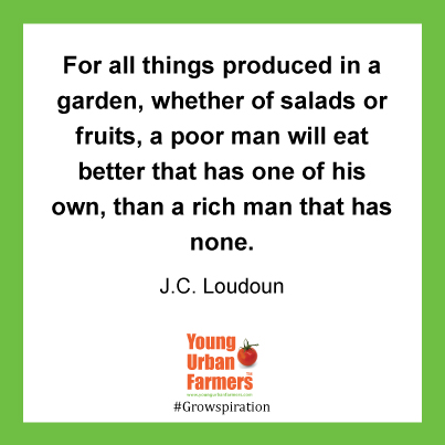 For all things produced in a garden, whether of salads or fruits, a poor man will eat better that has one of his own, than a rich man that has none. -  J. C. Loudoun