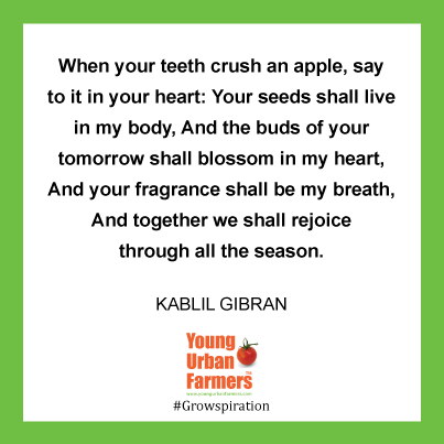 When your teeth crush an apple, say to it in your heart: Your seeds shall live in my body, And the buds of your tomorrow shall blossom in my heart, And your fragrance shall be my breath, And together we shall rejoice through all the season.  -Kablil Gibran