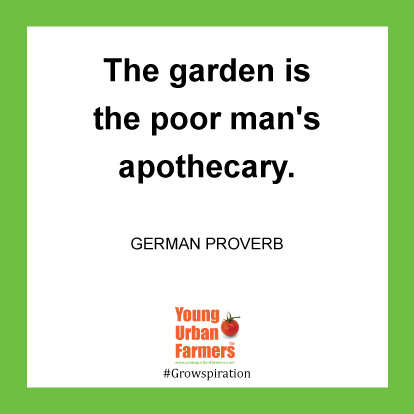 The garden is the poor man's apothecary. -German Proverb