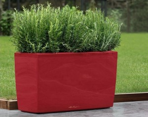 Red Cararo Planter with Rosemary