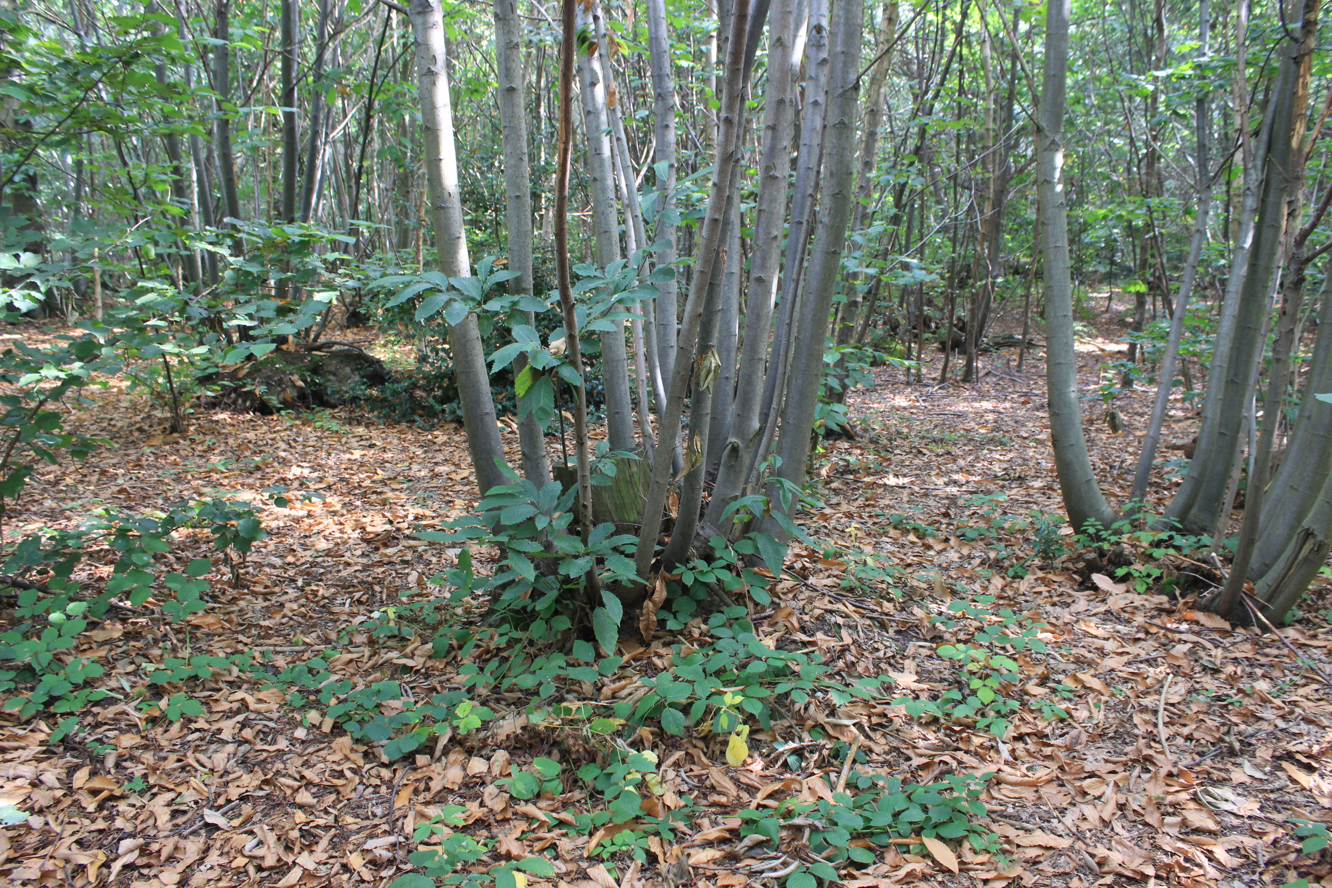 coppice pollard flickr