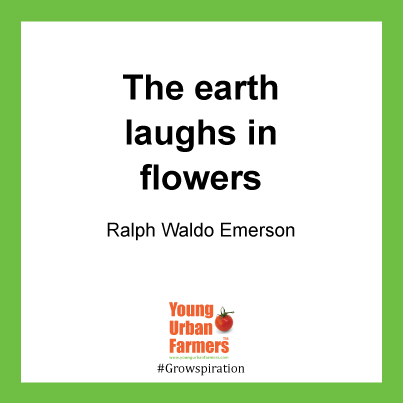 The earth laughs in flowers. Ralph Waldo Emerson