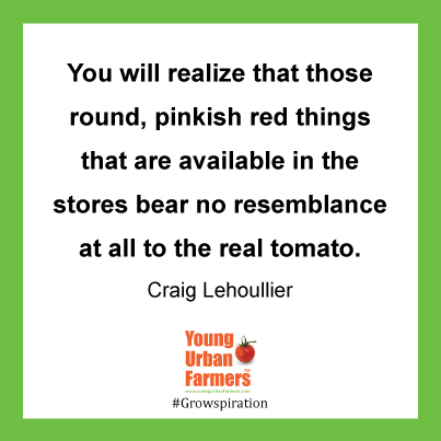 """You will realize that those round, pinkish red things that are available in the stores bear no resemblance at all to the real tomato"" Craig Lehoullier"