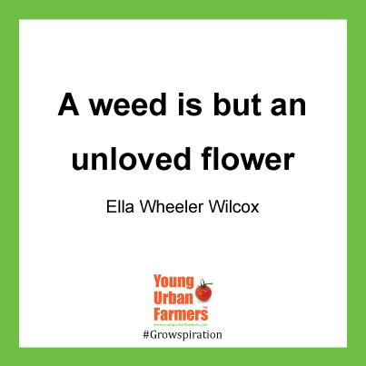 """A weed is but an unloved flower."" Ella Wheeler Wilcox"