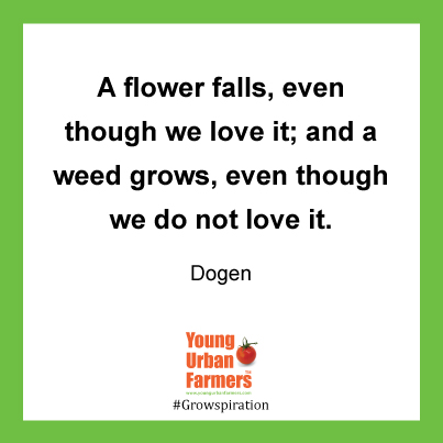 A flower falls, even though we love it; and a weed grows, even though we do not love it. Dogen