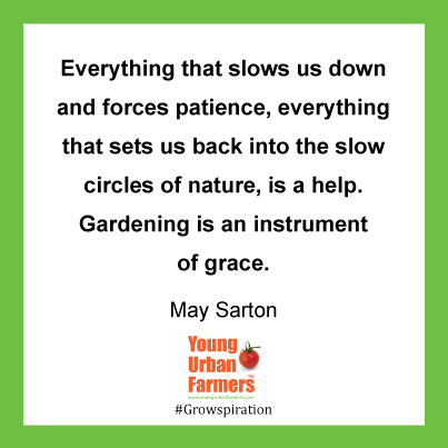 Everything that slows us down and forces patience, everything that sets us back into the slow circles of nature, is a help. Gardening is an instrument of grace. May Sarton