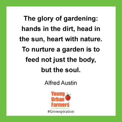 The glory of gardening: hands in the dirt, head in the sun, heart with nature. To nurture a garden is to feed not just the body, but the soul. Alfred Austin