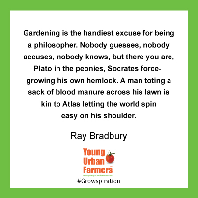 """Gardening is the handiest excuse for being a philosopher. Nobody guesses, nobody accuses, nobody knows, but there you are, Plato in the peonies, Socrates force-growing his own hemlock. A man toting a sack of blood manure across his lawn is kin to Atlas letting the world spin easy on his shoulder."" Ray Bradbury, Dandelion Wine"