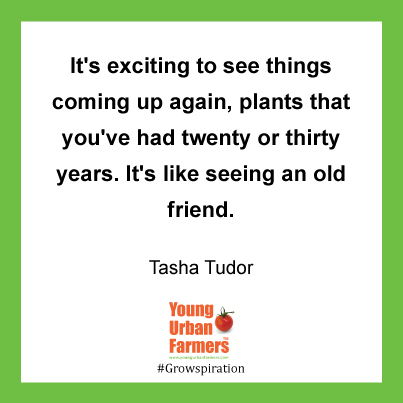 """It's exciting to see things coming up again, plants that you've had twenty or thirty years. It's like seeing an old friend."" Tasha Tudor, The Private World of Tasha Tudor"