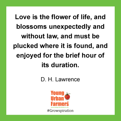 Love is the flower of life, and blossoms unexpectedly and without law, and must be plucked where it is found, and enjoyed for the brief hour of its duration. D. H. Lawrence