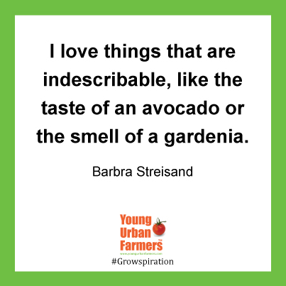 I love things that are indescribable, like the taste of an avocado or the smell of a gardenia. Barbra Streisand