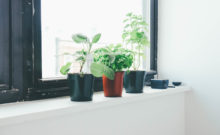 indoor plants on windowsill