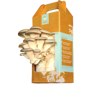 back to the roots oyster mushroom kit fruiting