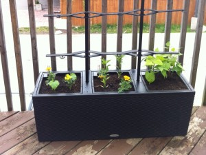 Young Urban Farmers Condo and Apartment Gardens - Young Urban Farmers